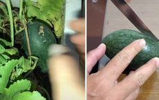 Trồng được trái dưa hấu tí hon trong vườn nhà, thử xẻ ra ăn, cô gái rất bất ngờ khi nhìn thấy bên trong