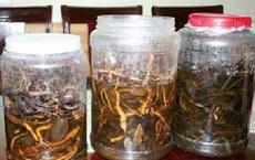 Rượu thuốc ngâm lá cây chữa bệnh có tốt?
