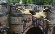 Giải mã cây cầu kỳ quái khiến hàng trăm con chó đi qua đều muốn tự tử