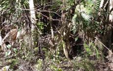 Nhìn vào bụi cây này, bạn có tìm ra con rắn cực độc có thể đoạt mạng người?