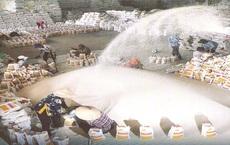 Gạo giá rẻ nhập từ Ấn Độ đang kéo tụt giá gạo xuất khẩu Việt Nam