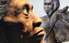 Tại sao những loài động vật trên các hòn đảo luôn kỳ dị hơn những người anh em trên đất liền?