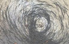 'Vòng xoáy giun đất' kỳ lạ xuất hiện ở Mỹ: Dân mạng bàng hoàng, các nhà khoa học bối rối tìm lý do giải thích