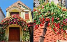 Giàn hoa trước cổng nhà cô gái khiến bao người tán thưởng mỗi khi ngang qua