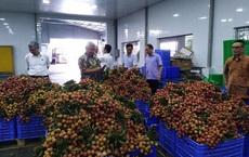 Năm bộ đồng ý cho thương nhân Trung Quốc nhập cảnh thu mua vải thiều