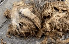 Hai chú chó đáng thương nằm bất động trên đường, trông như giẻ lau nhưng rồi gây ngỡ ngàng với màn lột xác ngoạn mục sau đó