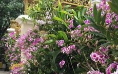 Trầm trồ chiếc hàng rào có hoa lan bung nở rực rỡ, dân mạng mải miết ghen tị vì gia chủ đã giàu lại còn biết cách chơi