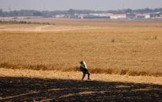 24h qua ảnh:  Binh sĩ Israel vác đạn pháo trên cánh đồng