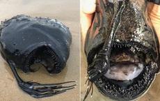 'Quái vật đại dương' ở sâu 1.000 mét dạt vào bờ biển: Sở hữu 'hành vi tình dục' dị tột bậc trong giới tự nhiên