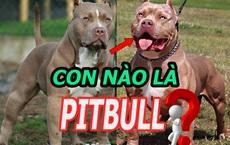 Trong 2 con chó này, con nào mới là Pitbull? Câu hỏi tưởng dễ mà làm khó nhiều người!