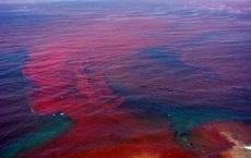 Biển Đỏ đang nở to, Trái Đất sắp có thêm 1 đại dương