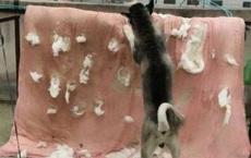 Vừa mang chăn bông ra phơi, chú chó nhà nuôi bỗng dưng lao vào cắn xé, lại gần để xem, cô gái không khỏi rùng mình