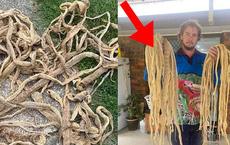 Kiểm tra tầng gác mái, người đàn ông thất kinh bạt vía khi thấy 50 tấm da rắn khô rang, phát hiện tiếp theo còn kinh dị hơn