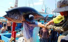 Bình Định bất ngờ dừng tham gia dự án Cảng cá Tam Quan có vốn 540 tỷ đồng