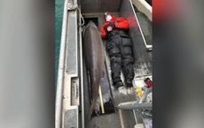 Bắt được cá tầm 100 năm tuổi, dài hai mét nặng một tạ
