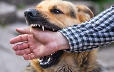 Những ca tử vong vì chó dại cắn: Khi phát bệnh cũng là lúc đối diện với cái chết, chỉ có 1 cách duy nhất để phòng ngừa