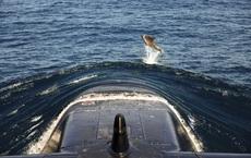 24h qua ảnh:  Cá heo nhào lộn trước mũi tàu ngầm khổng lồ