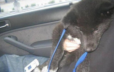 """Nhặt chú chó lang thang về nuôi dưỡng, vài tháng sau, chủ nhân phát hoảng khi phát hiện ra """"bộ mặt thật"""" của con vật"""