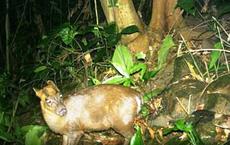 Huế phát hiện loài thú cực hiếm, nhờ chuyên gia quốc tế đánh giá