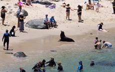 7 ngày qua ảnh:  Sư tử biển tắm nắng cùng du khách trên bãi biển