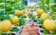 Vườn sân thượng trĩu quả, rau xanh: Vừa tiết kiệm tiền lại chống nóng cực chuẩn