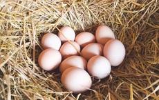 Phát hiện trứng gà thường xuyên bị mất, chủ trang trại quyết rình bằng được kẻ trộm rồi bủn rủn khi thấy thủ phạm