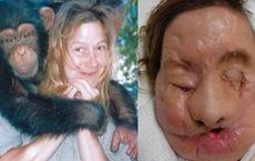 Chuyện về khỉ Travis: Sống như người suốt 14 năm bỗng 1 ngày điên cuồng cắn xé người thân, trước khi chết vẫn cố lê bước về giường của mình