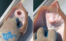 """Bắt được chú cá đuối, ngư dân cù không ngừng để nó """"cười"""" khiến con vật chết vì ngạt thở"""