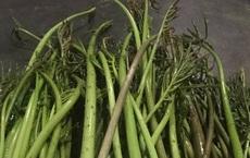 Xưa dùng để chống đói, nay trồng loại rau này không chỉ thoát nghèo mà còn kiếm tiền triệu mỗi ngày