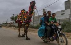 24h qua ảnh: Dân Pakistan dẫn lạc đà từ chợ về nhà trước lễ Eid al-Adha