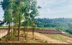 Nhà giàu Hà Nội choáng với cơn 'ngáo giá' đất quê