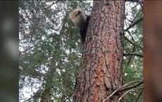 """Thấy thú """"lạ"""" chạy quanh nhà người dân gọi điện báo, lực lượng chức năng có mặt, sững sờ với cảnh tượng trên cây"""