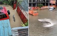 """Mưa lũ tồi tệ tại Trung Quốc, cá mập, cá sấu """"vượt ngục"""" tràn ra đường phố?"""