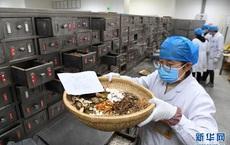 Bài thuốc Đông Nam dược phòng chống Covid-19 được Trung Quốc sử dụng rộng rãi nhất