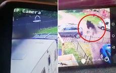 """Xem camera an ninh thấy bóng đen lướt qua nhà, bà mẹ cho hàng xóm xem khiến cả khu phố """"khiếp vía"""""""
