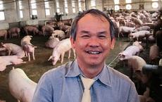 Bầu Đức gặt hái thành công bước đầu từ nuôi lợn