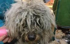 Người phụ nữ nhặt được chú chó hoang nên mang ra tiệm nhờ tắm rửa, không ngờ chủ tiệm vừa nhìn thấy đã hỏi mua bằng được