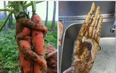 """""""Xỉu ngang"""" trước những loại rau củ quả mọc đủ hình thù kỳ quái, xem ảnh mới thấy sức mạnh của thiên nhiên kinh khủng thế nào!"""