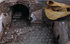 Khai quật lăng mộ nữ quý tộc nhà Đường, phát hiện điều khó tin