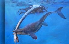 """""""Quái vật miệng dài"""" từng cai trị đại dương cổ đại"""