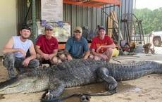 Mỹ: Phát hiện cổ vật ngàn năm trong bụng cá sấu quái vật