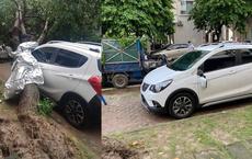 Ôm trọn cây bị đổ sau mưa lớn, thiệt hại của VinFast Fadil làm CĐM thốt lên: ''Mua Fadil thôi''