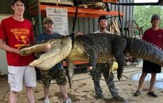 Bắt được cá sấu khổng lồ, người đàn ông phát hiện kho báu vô giá trong bụng con vật