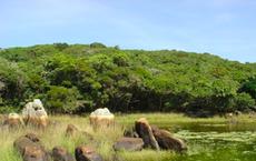 Núi Chúa và Kon Hà Nừng của Việt Nam được công nhận là khu dự trữ sinh quyển thế giới