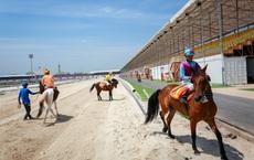 """Số phận đàn ngựa """"quý tộc"""" trong trường đua Đại Nam của bà Phương Hằng ra sao?"""