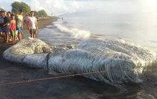 10 sinh vật kỳ dị được biển cả 'freeship' vào đất liền