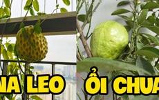 Khoe vườn cây trái 'trĩu quả' trồng được trên chung cư, cô gái khiến dân mạng cười 'sang chấn tâm lý' vì một lý do
