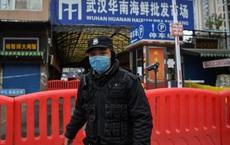 Nguồn gốc COVID-19: Phát hiện hơn 140 virus corona từ dơi ở Trung Quốc - Kết quả đầy bất ngờ!