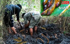 Đi rừng phát hiện thấy đầm hoang, nhóm đi rừng dùng tay bới thử và kết quả vượt ngoài sự mong đợi