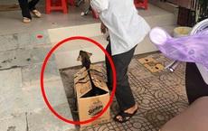 Chú cún con bị tách mẹ, nhốt vào chiếc hộp giấy khiến nhiều người tò mò và lý do phía sau gây bất ngờ